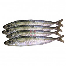 Galunggong (Mackerel Scad)
