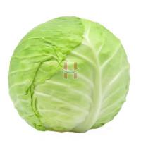 Repolyo (Round Cabbage)