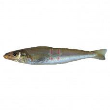 Asuhos (Silver Banded Whiting Fish) Assorted Size